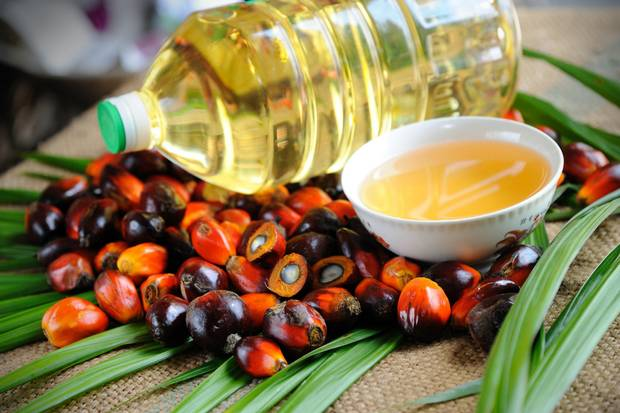 Sustainable palm oil regulations are changing in 2019